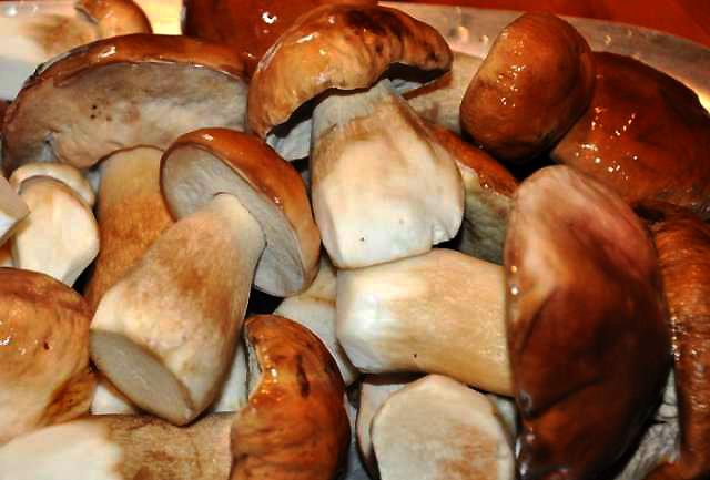Грибовница из свежих грибов как приготовить