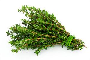 пряные травы фото
